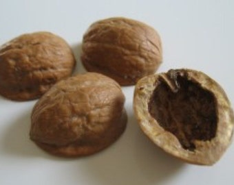 Walnut Shell Halves