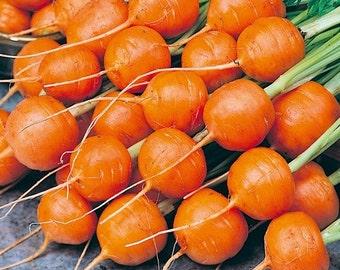 Carrot Parisian Vegetable Seeds (Daucus carota) 200+Seeds