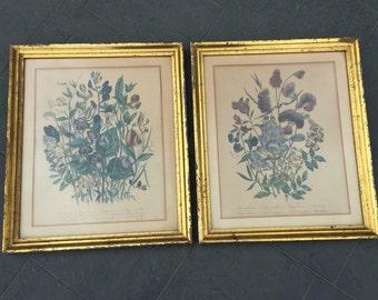 Pair of Vintage Botanical Prints