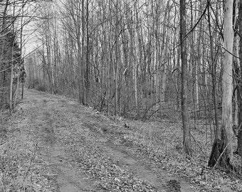 Road Through the Woodlot