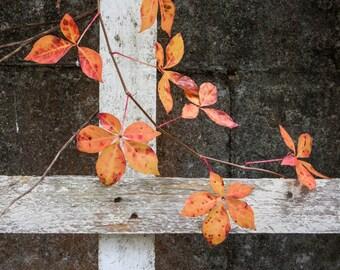 Orange leaves on a white trilles.