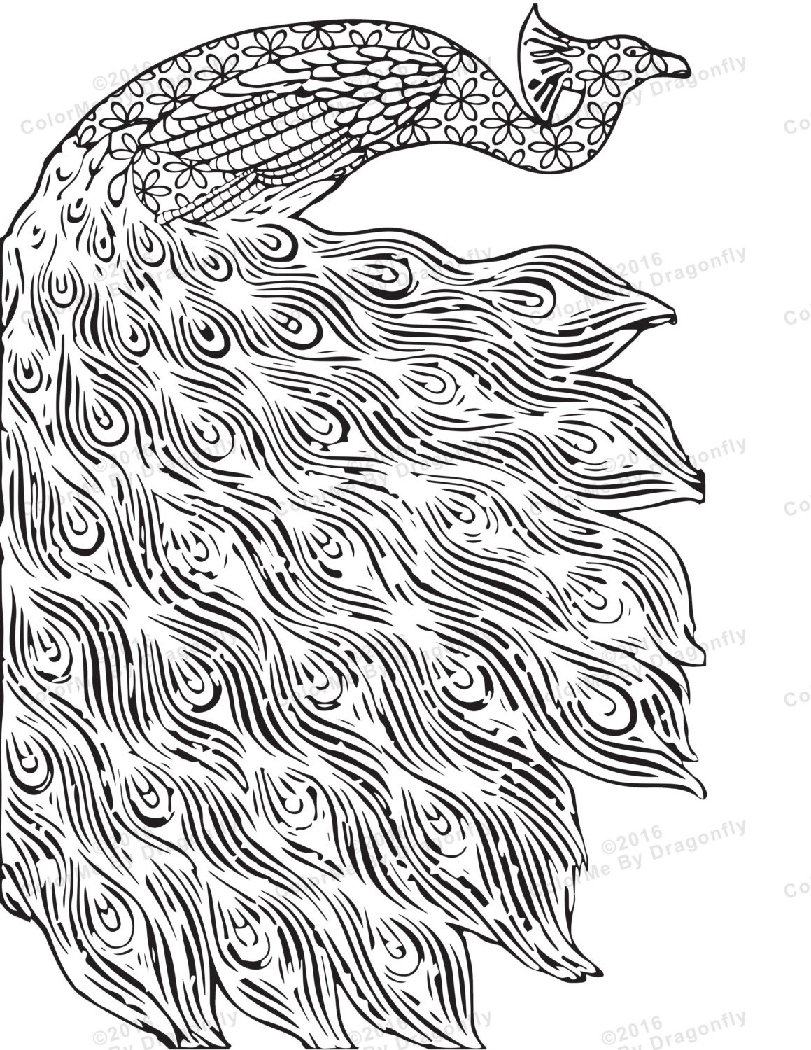 Peacock coloring pages - photo#45