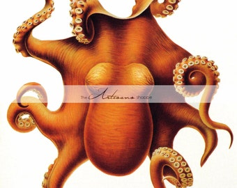 Printable Instant Download - Octopus Vintage Image - Paper Crafts Scrapbooking Altered Art - Orange Octopus Nautical Ocean Beach Sealife