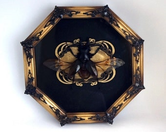 Real stag beetle frame Odontolabis dalmanni / natural history art victorian decor unique handmade gift preserved bug butterfly
