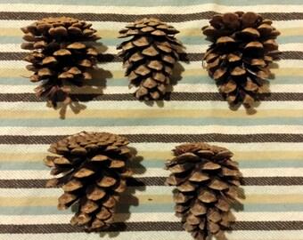 5 Norway Red Pinecones