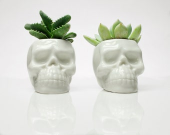 Skull Plant Pot  WITHOUT Succulent, Birthday Gift