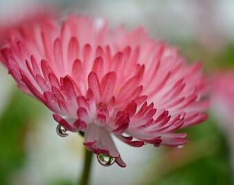 Pink Flower Garden Photograph #49