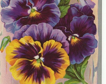 Vintage Postcard: Pansies Birthday Postcard