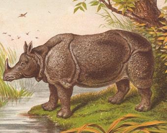 Antique Rhino Lithograph