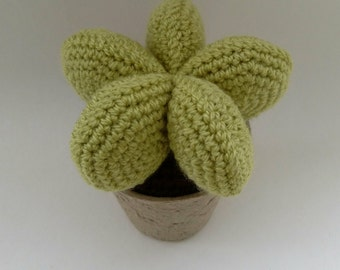 4. Crochet Succulent plant