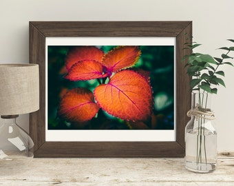 Nature Photography, Fall Colors, Wall Decor, Orange and Red, Rustic Farmhouse Decor, Home Decor Gifts