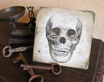 Life-size Skull drawing on worn paper Original art