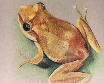 Coqui, Puerto Rico Frog Original Drawing