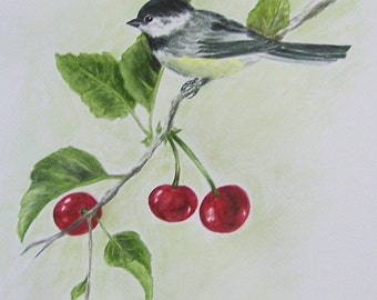 Chickadee and Cherries, Realistic watercolor painting of black-capped chickadee in cherry tree