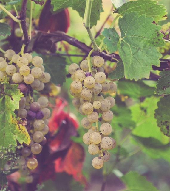 grape vine decor vineyard vines wine grapes home decor