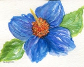 Blue poppy watercolors paintings original, 4 x 6  blue Himalayan poppy  watercolor painting, flower painting, flower decor SharonFosterArt
