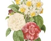 Botanical Art Print, Camellia, Narcissus, Pansy, Floral Canvas Print, Home Wall Decor, Floral Art Print, Victorian Antique Flowers