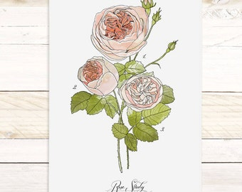 Rose Study Vol.1 - large wall hanging, wood trim and printed on textured cotton canvas. Vintage Science Posters