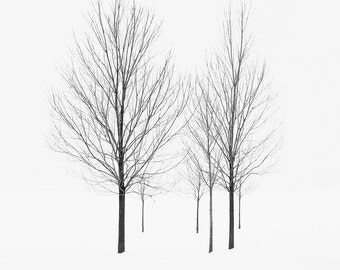 Minimalist Winter Landscape Photography - Black and White Nature Photography - Large Tree Art Print - Modern Rustic Decor - Snow Print