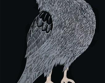 Australian Raven Poster from the Children's Bird Book by Bridget Farmer
