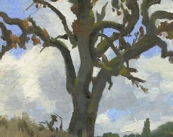 Original Oil Painting: Dying Oak Tree, Plein Air