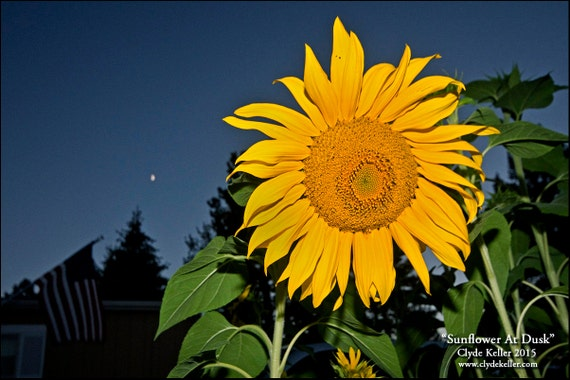 SUNFLOWER AT DUSK, porch view, Clyde Keller Photo, Fine Art Print, Color, Signed