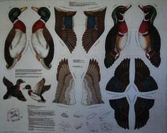 Teal/Brown Wood Duck and Mallard Fabric Panel 2-dimensional
