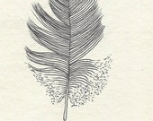 Original ink feather drawing ~ soft black feather