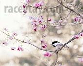 Chickadee Prints, Pink, Gray, Shabby Chic, Bird Photography, Cute Bird, Chickadee Photo, Bedroom Wall Art