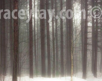Rustic Cabin Decor, Brown, White, Winter Tree Print, Nature Photography, Pine Forest, Neutral, Fog, Snow