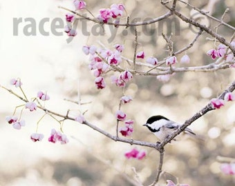 Chickadee Print, Pink, Gray, Bird Photography, Pastel Decor, Bedroom Wall Art, Girl Nursery Decor