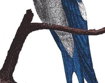 Tree Swift Notepad (Blank Book)