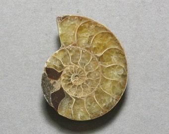 fossil AMMONITE cabochon 26X32mm pendant designer cab