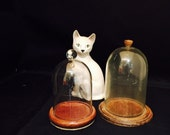 Pocket Watch Display Cases Two Plexiglass Domes With Wood Bases Cloche Watch Holders