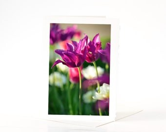 Tulips Spring Cards, Blank Photo Greeting Cards, Purple  Lily Flowered Tulips Cards, Flower Photo Note Card Sets, Nature Photography Cards