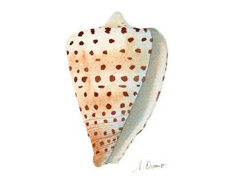 Ivory Cone, Watercolor Seashell Illustration - Archival giclee print - Nature illustration, Beach cottage decor, Sealife art