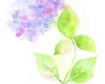 Fine art watercolor painting, flower art, violet Hydrangea WATERCOLOR PRINT, giclee print, flower interest
