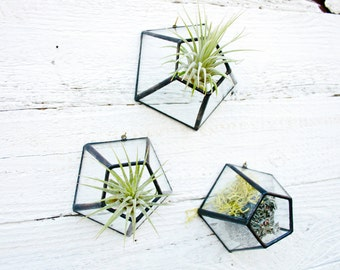 Barnacles - Set of 3 / wall barnacles / air plant holder / wall decor / hanging terrarium / recycled glass / stained glass / wall hanging
