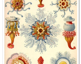 Ernst Haeckel Jellyfish Poster, Art Print, Jellyfish In Corals And Blue Nautical Art Wall Hanging from a Vintage Scientific Illustration