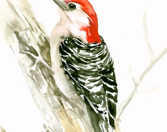 Red Bellied Woodpecker, 12 X 9 in, original watercolor painting