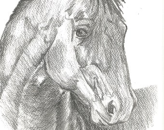 Horse, Horse Drawing, Horse Print, Horse Pencil Drawing, Drawing, Pencil Drawing Print, Morgan Horse, Horse Decor, Country Decor