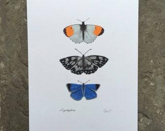 Trio of Butterflies / Hand drawn