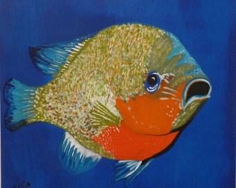 Red Breast Sunfish