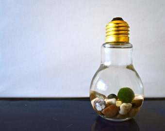 Marimo Moss Ball Light Bulb Aquariums - Japanese Nano Moss Balls in Lightbulb Glass Vase Terrariums - River Stone
