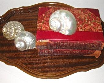 Antique Mahogany Scalloped Wood Tray