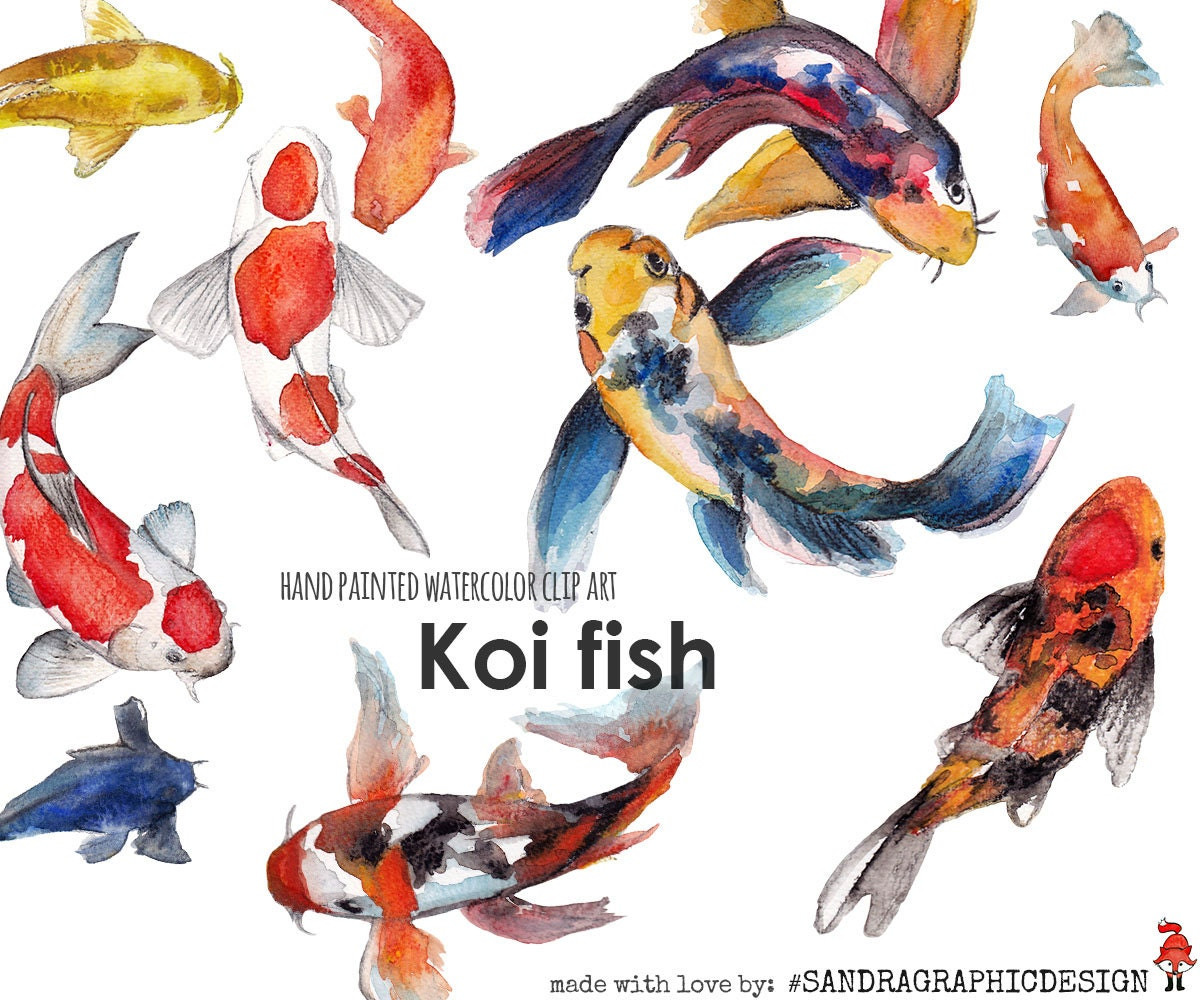 Koi fish clip art hand painted watercolor clip art 5242 for Koi fish images