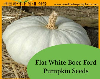 Flat White Boer Ford Pumpkin Seeds - 10 Seed Count