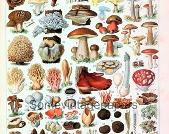 "Mushrooms 2 digital files vintage french dictionnary 9x12"" automatic download"