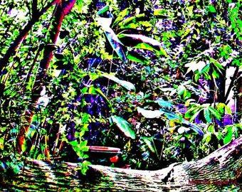 Rainbow Tropical Forest