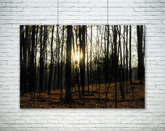 Landscape Photography Large Wall Art Rustic Decor Autumn Fall Canvas Art Nature Home Decor Rustic Forest Print Woodland Sunburst Sun Trees